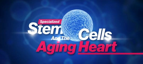 specialized stem cells and the aging heart su 604x270 1